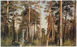Нажмите на изображение для увеличения.  Название:shishcin-pine.jpg Просмотров:243 Размер:68.8 Кб ID:1314