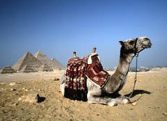Название: egiptoG.jpg Просмотров: 1615  Размер: 21.5 Кб